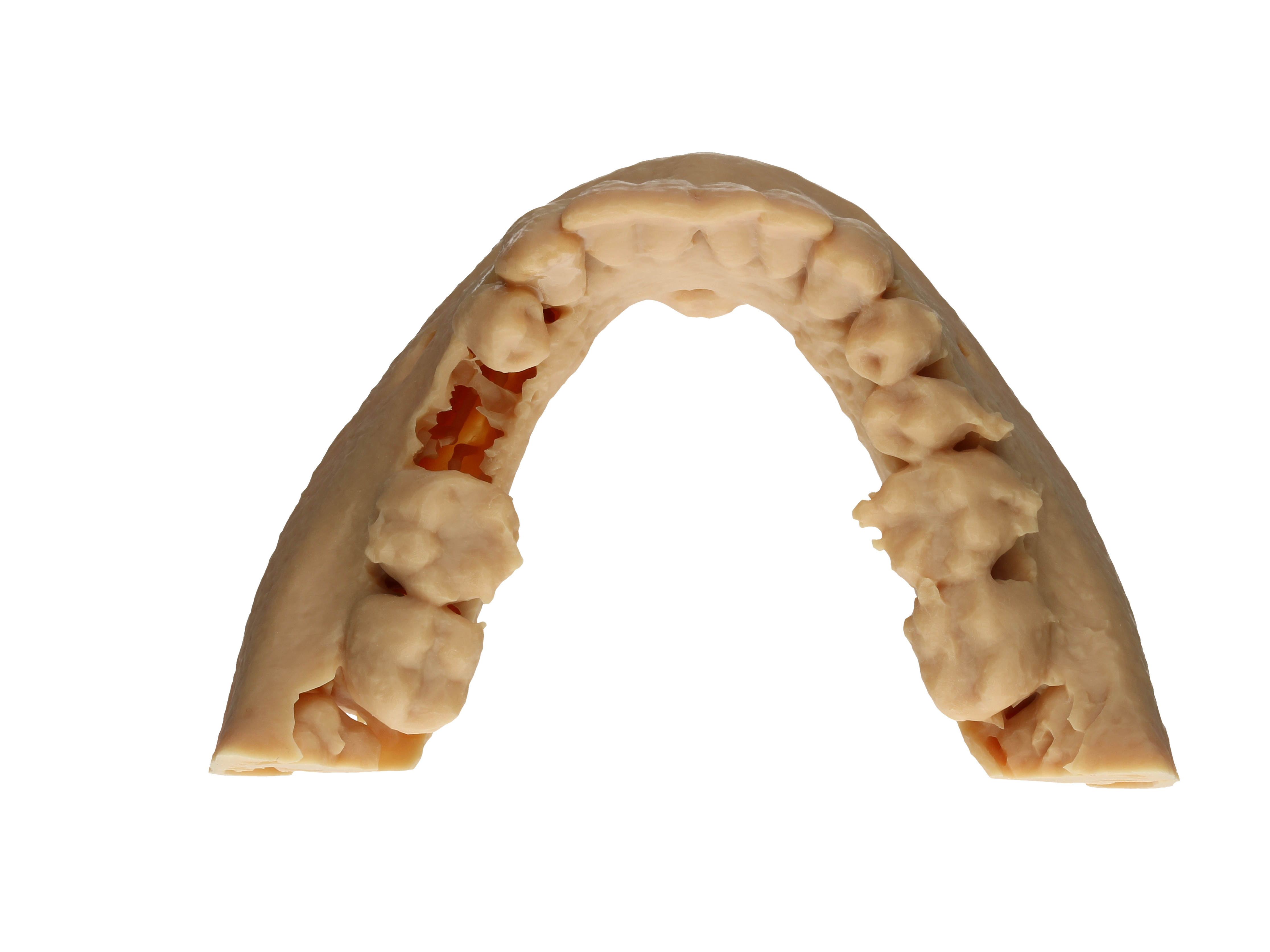 Modell des Unterkiefers aus okklusaler Ansicht